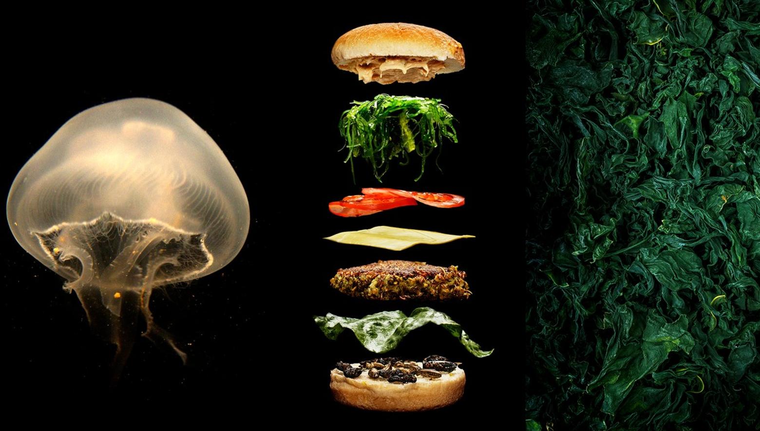 Framtidens mat